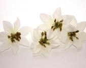 14 Mini White Poinsettias - Artificial Flowers, Holiday Flowers