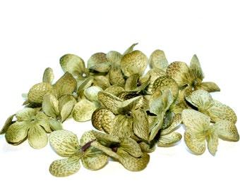 100 Hydrangea Blossoms in Olive Green - PRE-ORDER