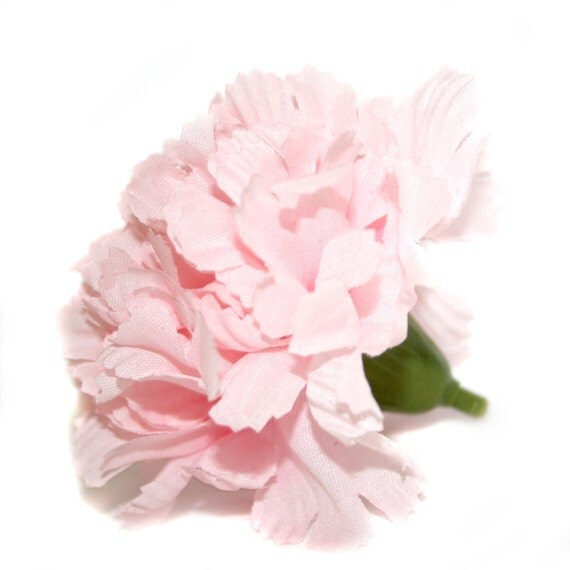 1 Cotton Candy Pink Carnation