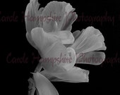 Lightness of Being Limited Edition Fine Art Print 10.8 x 7.2 ins