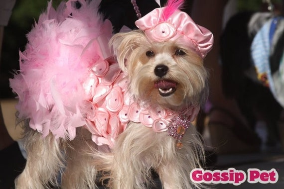 "Dog Dress Feather Harness - Pink Dog Wedding ""Crazy in Love"""