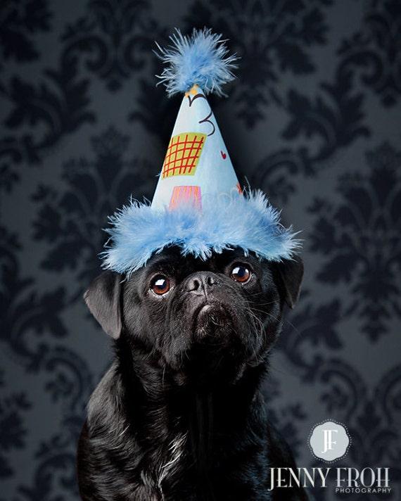 Blue Cupcake Dog Birthday Hat