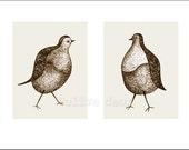 pigeon pair, double portrait - fine art print (large)
