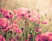 My sweet garden - 6x8 photography print, pink, rose, wall decor, flowers print, patel flowers print, fine art photography