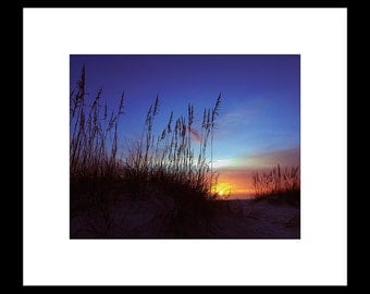 Sea Oats At Sunset 8X10 Custom Print