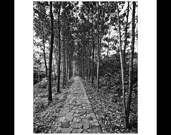 Pathway in the Woods 11X14 Fine Art Print