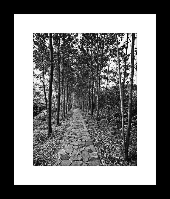 Pathway in the Woods 11X14 Fine Art Print