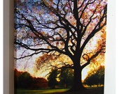 Morning Star Tree...16x20 gallery wrap canvas