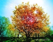 SPLENDID.SUNBURST...11x14 matted autumn fall photograph trippy psychedelic art red yellow tree warm sunrise fractals mandalas