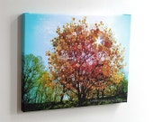 Splendid Sunburst...16X20 gallery wrap canvas