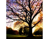 MORNING.STAR.TREE...16x20 matted tree photograph sunrise stained glass purple spiritual meditation dreamy romantic