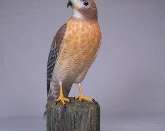 10 inch Red-shouldered Hawk Hand Carved Wooden Bird
