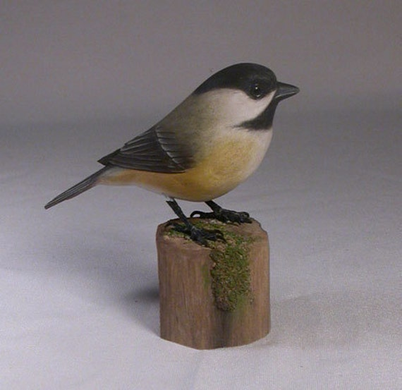 Black-capped Chickadee on wooden carved stump