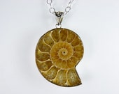 Golden Sunshine Ammonite Fossil Pendant Necklace on a Sterling Silver Chain