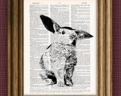 Bunny rabbit beautifully upcycled vintage dictionary page book art print 8.5 x 11 -  Buy 3 get 1 Free