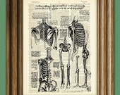 Science Art Print Study of the Human Skeleton from Leonardo DaVinci sketch on vintage dictionary page book art print Da vinci