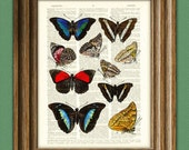 Colorful study of BUTTERFLIES over an upcycled vintage dictionary page book art print - Buy 3 get 1 Free