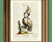 THE GRAND COCKATOO beautifully upcycled vintage dictionary page book art print