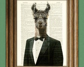 Llama Art Print Larry the stud of the prom in a TUXEDO illustration beautifully upcycled dictionary page book art print