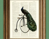 Peacock Bicycle Art Print PEACOCK on a vintage PENNY FARTHING bicycle bike illustration beautifully upcycled dictionary page book art print