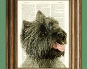 Cairn Terrier dog beautifully upcycled vintage dictionary page book art print