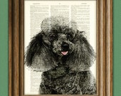 Miniature Black Poodle dog beautifully upcycled vintage dictionary page book art print