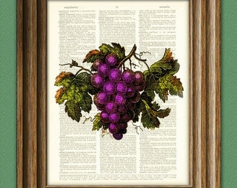 GRAPES vino wine illustration beautifully upcycled dictionary page book art print