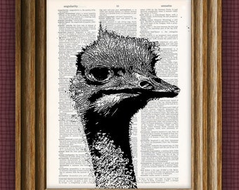 OSTRICH beautifully upcycled vintage dictionary page book art print 8.5 x 11