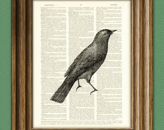 NIGHTINGALE bird illustration beautifully upcycled dictionary page book art print