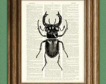 STAG BEETLE illustration on a dictionary page altered art book print