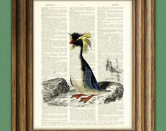 Macaroni Penguin illustration beautifully upcycled dictionary page book art print