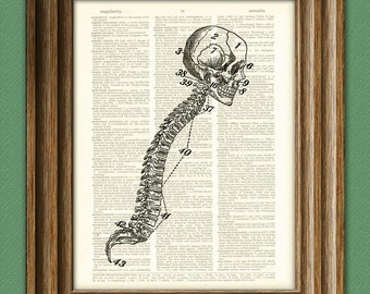 Cool human SKULL and SPINE beautifully upcycled dictionary page book art print