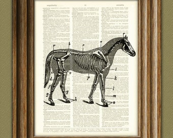 Skeleton of Horse Anatomy beautifully upcycled vintage dictionary page book art print