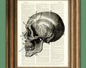 Diagram of a SKULL SIDE VIEW black over an upcycled dictionary page book art print