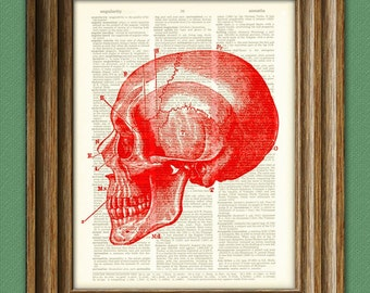 Skull Art Print Diagram of a RED SKULL Side View over an upcycled dictionary page book art print