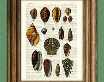 Colorful Sea Shells of the World beautifully upcycled vintage dictionary page book art print