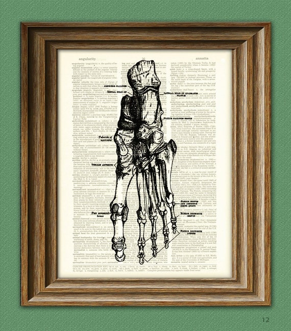 Human FOOT BONES from Gray's Anatomy illustration beautifully upcycled dictionary page book art print