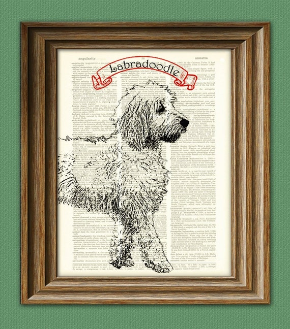 LABRADOODLE labrador and poodle mix dog  dictionary  print PERSONALIZED