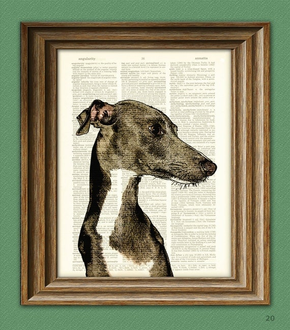 Italian Greyhound dog beautifully upcycled vintage dictionary page book art print
