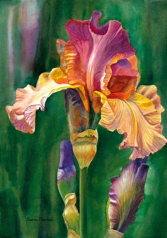 Fine Art Print, Watercolor Iris, 11x14 Matted