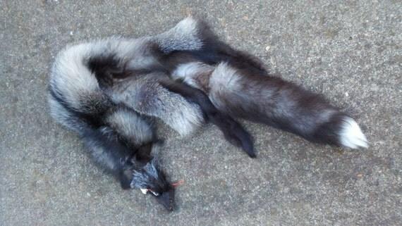 Craft Grade Silver Fox Pelt - RESERVED for northernwhitewolf