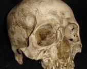 Human skull prop
