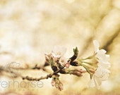 Spring flowers on tree branch vintage inspired color pink white green blush tan carmel- 11x14 Fine Art Photography Print