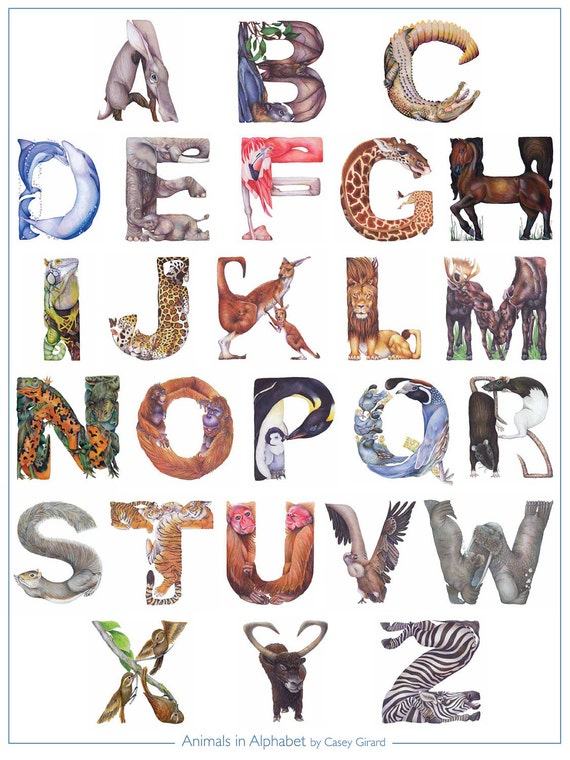 Animals in Alphabet - Poster 18 x 24 - Casey G.