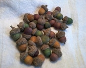 Organic Acorn caps with Stained Wooden nut-lings