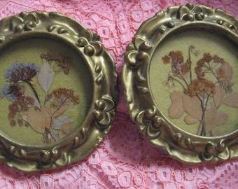 "FLORENTINE Gilt Miniature Frame Antique Pressed Flower Collection Botany round 5"" c1880 Shabby Chic Cottage Victorian"