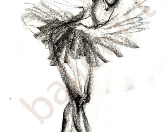 The black swan -pencil  hand drawing - artwork print
