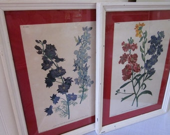 vintage Botanical prints by J.L. Prevost, framed & matted under glass, 9 x 12, chippy cottage floral charm. Flowers