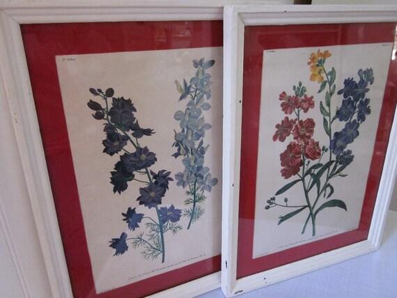 vintage Botanical prints by J.L. Prevost, framed & matted under glass, 9 x 12, chippy cottage floral charm. Flowers