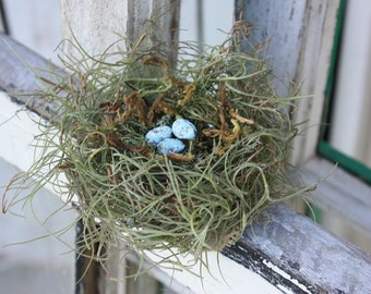 Handmade Bird nest with robbin eggs